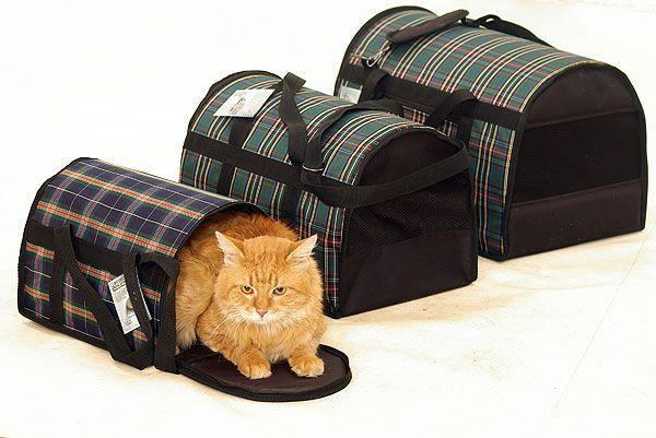 Кошка и три специальных сумки для транспортировки